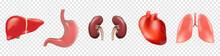 Different 3D Human Organs Set ...