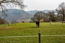 Horses On A Big Pasture