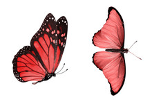 Beautiful Two Red Butterflies ...
