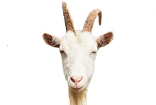 Goat Head Isolated On White Ba...