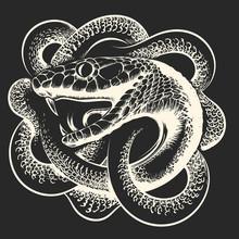 Coiled Snake Hand Drawn Illustration