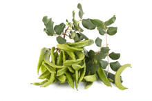 Green Carob Pods Isolated On W...