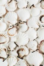 Sea Shells Pattern On White Ba...