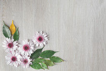 Three Pink Aster Flowers On A Trendy Mint Background. Flat.Top View