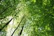 Słońce przebijające się przez gałęzie drzew pokryte zielonymi, wiosennymi liśćmi