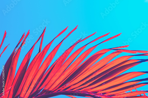 Photo Stands Turquoise Copy space pink tropical palm tree on sky abstract background. Summer vacation and nature travel adventure concept.