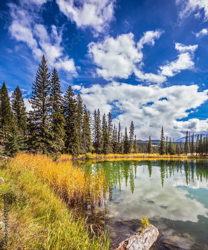The shallow lake with evergreen fir-trees Canvas