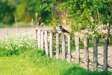 Crow Perched On Wooden Post In Meadow.