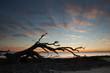 Driftwood at sunrise on the beach