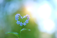 Delightful Bright Scene With Flowers Forget-me In Form Of Heart. Spring Forget-me-not Forming Blue Heart On Green Nature Background. Romantic Flower Concept, Love Symbol. Copy Space