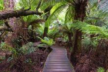 Maits Rest Rain Forest Walk