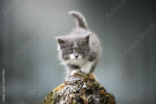beautiful fluffy kitten posing outdoors Canvas Print