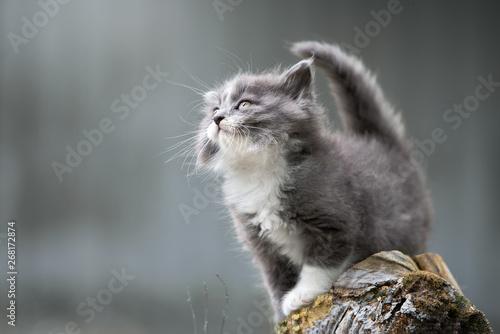 Fotografia beautiful fluffy kitten posing outdoors