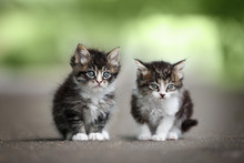 Two Adorable Tabby Kittens Posing On The Road