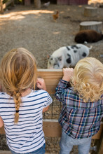 Kids Looking At Farm Animals