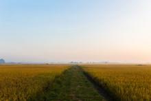 A Road Through A Grass Field I...