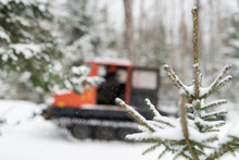Close-up View Of Snow Covered Tip Of Small Conifer With Snow Grooming Machine
