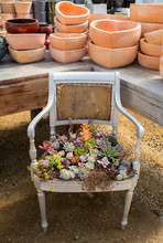 Old Chair Filled With Succulents