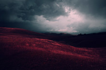 Surreal Red Meadow Landscape