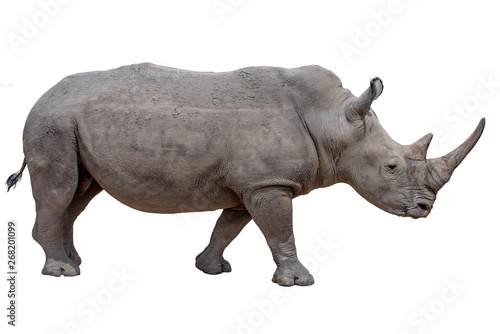 Fotografija  Rhinoceros isolated on white background.