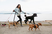 Teenage Girl Walking Dogs