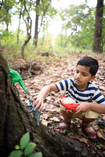 Young Boy Playing With Toy Dinosaurs In The Forest