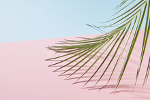 Leaves Of Palm Tree Isolated On A Double Pink Blue Background