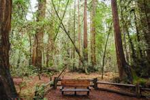 Redwoods Bench 2