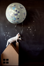 White Kitten Standing On The Roof Of A Cardboard House