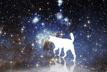 White Dog Against The Background Of Stars And Galaxies Of The Universe