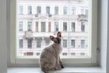 Cat Sitting On A Window
