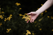 Woman Holding Wild Yellow Flowers .
