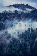 View Of Fog Covered Trees In Forest
