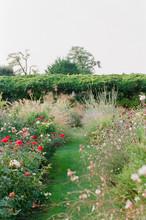 An Overgrown And Wild Garden I...