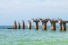 Pelicans On Old Pier Pilings