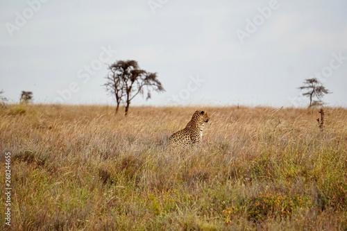 Foto op Plexiglas Afrika AFRICA
