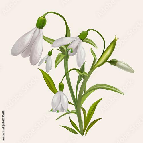 Fotografía  Blooming snowdrop flowers