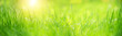 Green grass abstract blurred background. beautiful juicy young grass  in sunlight rays. green leaf macro. Bright fresh Summer or spring nature background. Panoramic banner. soft selective focus