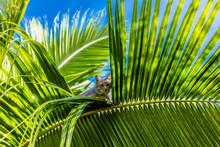 Le Chat Dans Le Palmier