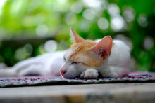 Lazy Cat Sleeping On The Carpet With Selective Focus