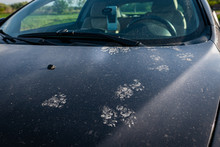 Animal Footprints On A Dirty Car. Cats Or Martens Can Chew The Wire In The Car.