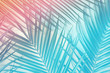 Tropical palm leaves in vibrant neon gradient, holographic colors. minimal art concept.