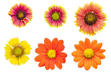 Orange And Yellow Gaillardia As White Background Picture.Flower On Clipping Path.