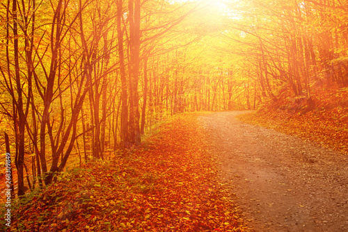 Foto op Canvas Baksteen Beautiful autumn landscape