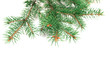canvas print picture - X-mas fir tree branch isolated on white background. Pine branch. Christmas background