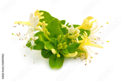 Lonicera japonica, known as Japanese honeysuckle and golden-and-silver honeysuckle Fototapet