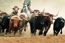 Rinderherde In Aktion