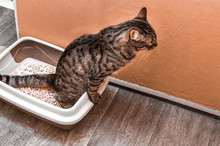 Cat Pees In A Pot With A Woode...