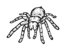Tarantula Lycosa Wolf Spider S...