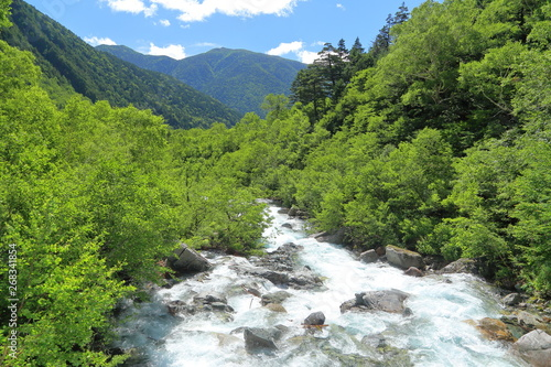 Printed kitchen splashbacks Forest river Mount Scenery, Mountain river, Nature
